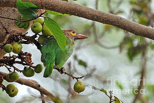 Bird in the bush by Pravine Chester