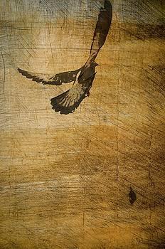 Bird by Miguel Pardo