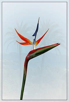 Bird of Paradise by John Fotheringham