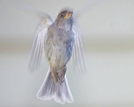 Bird of the Spirits by Jim Wright