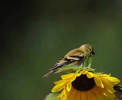 Bird on a flower by Jeff Swan