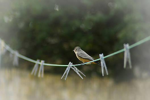 Cindy Nunn - Bird on a Line 1