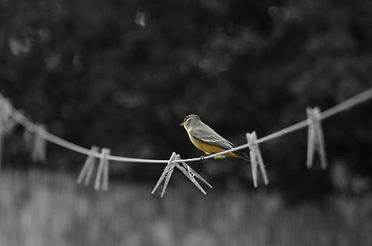 Cindy Nunn - Bird on a Line 2