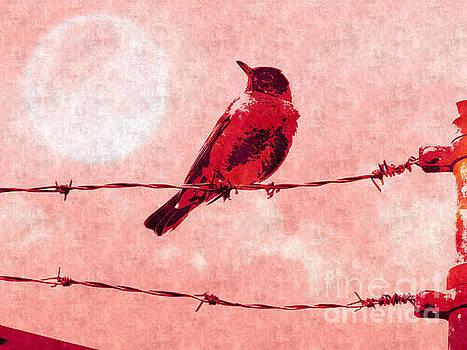 Bird on the Wire  by Putterhug  Studio