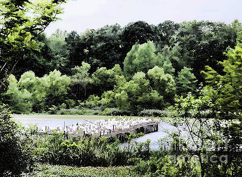 Chuck Kuhn - Bird Sanctuary Egrets
