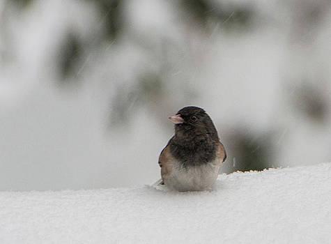 Chilly Bird by Marilyn Wilson