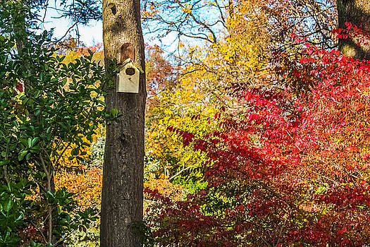 Birdhouse in Autumn by Kathleen McGinley