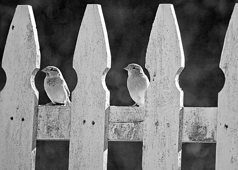 Birdies by Antonio Gruttadauria