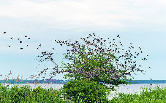 Birds And Tree by Brian Wallace
