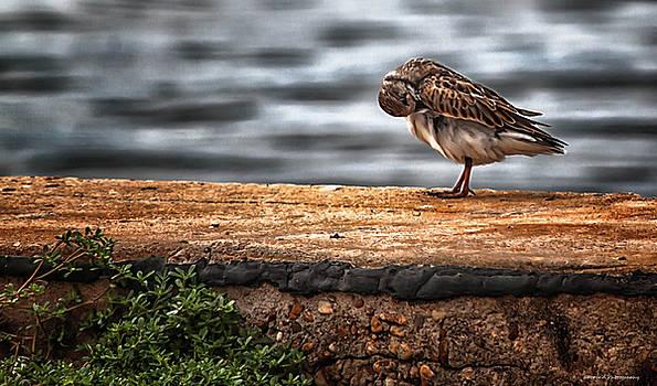 Birds Got It Good by Debra Forand