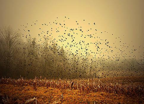 Birds by Mark Orr