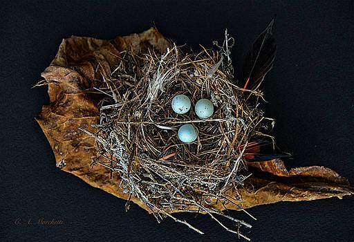 Birds Nest #4 by Carolyn Marchetti