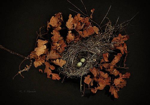 Birds Nest #6 by Carolyn Marchetti