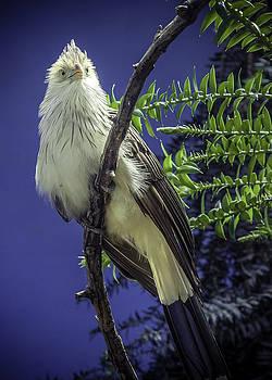 Birds of Prey by Jason Moynihan