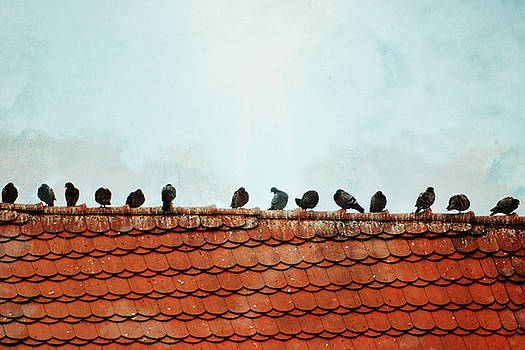 Birds on a Rooftop by Sharon Coty