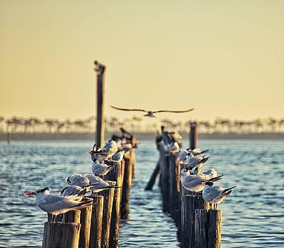Birds on the Beach by Susan Bordelon