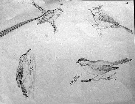 Birds by Sonam Shine
