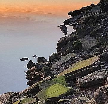 Birdseye View by Suzy Piatt