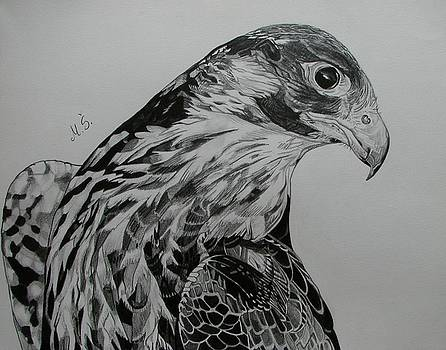 Birdy by Melita Safran