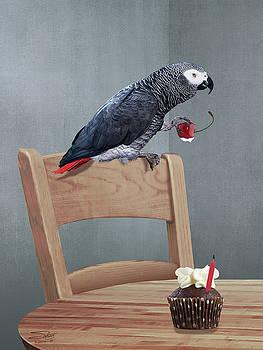 Birthday Bird by Matthew Schwartz