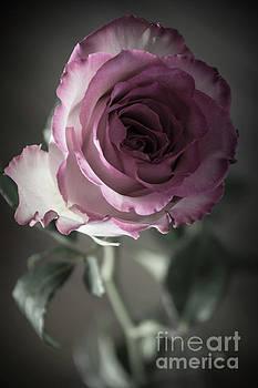 Birthday Rose by Deborah Klubertanz