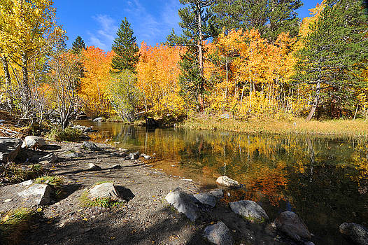 Bishop Creek in the Fall by Dung Ma