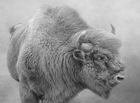 Bison by Roy McPeak