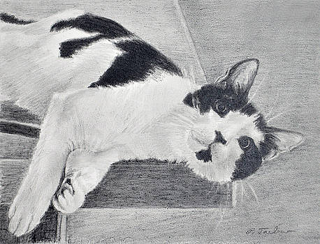 Phyllis Tarlow - Black and White Cat Lounging