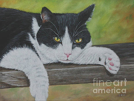 Black and White Cat by Sid Ball