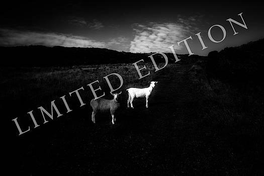 Black And White by Dorit Fuhg