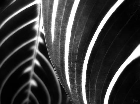 Black and White Stripes by Jeff Breiman