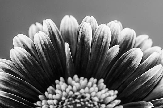 Black and white sunflower by Gerald Kloss