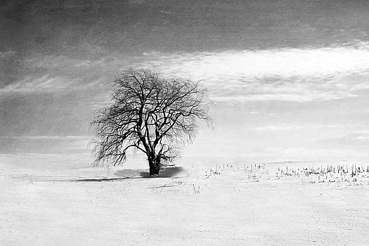 Black and White Tree in Winter by Brooke T Ryan