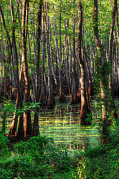 Black Bayou 1 by Ester  Rogers