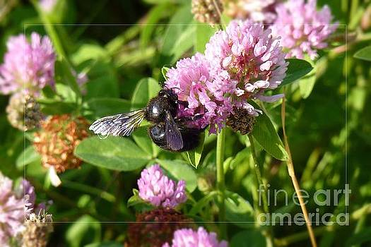 Black Bee on Small Purple Flower by Jean Bernard Roussilhe