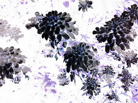 Black Blooms I by Orphelia Aristal