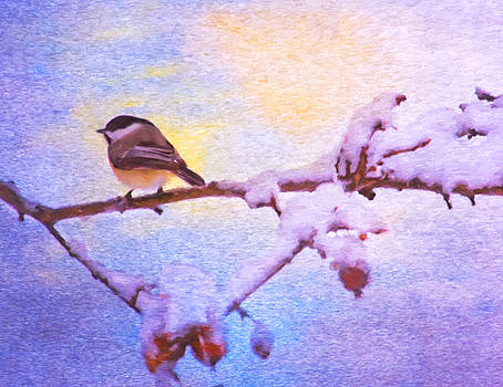Black Cap Chickadee Winter Twilight by Daphne Sampson