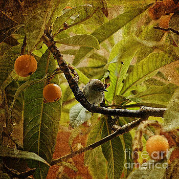Black Cap in A Lemon Tree by Liz Alderdice