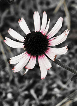 Black Eyed by Deborah  Crew-Johnson