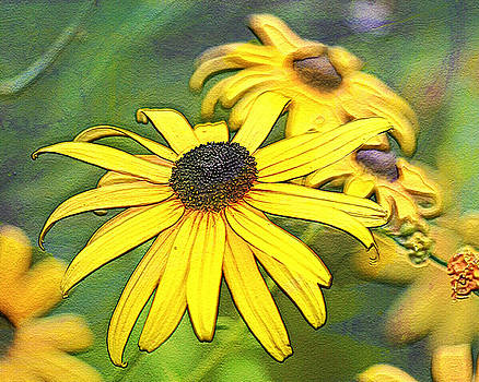 Black Eyed Susan by Marilyn Peterson