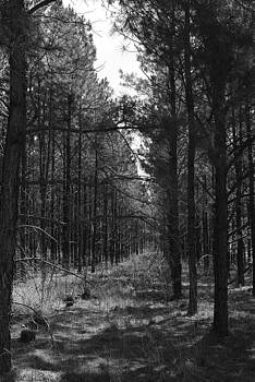 Black Forrest by Rich Caperton