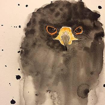 Black Hawk by Annette Bingham