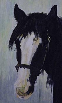 Black Horse by Andrea Inostroza