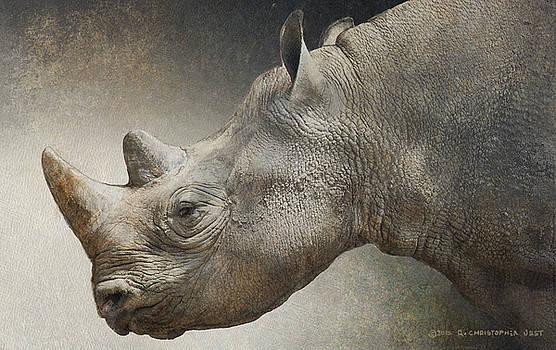 Black Rhino Portrait by R christopher Vest
