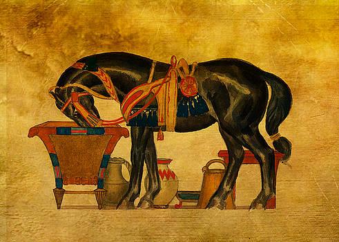 Black Stallion by Sarah Vernon