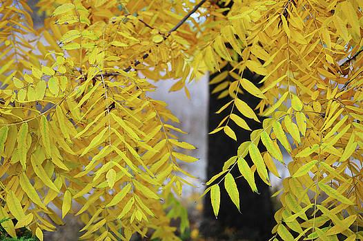 Jenny Rainbow - Black Walnut Tree in Autumn