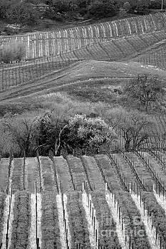 Chuck Kuhn - Black White Napa Vineyards