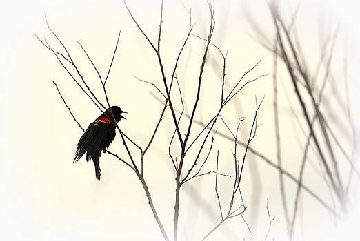 Rosanne Jordan - Blackbird Sing