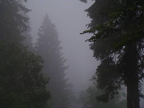 Blackforest Mist 3 by Martin Bellmann