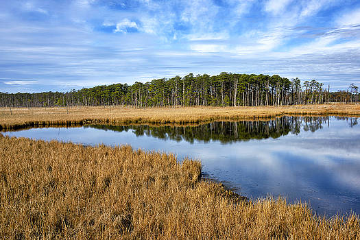 Blackwater National Wildlife Refuge in Maryland by Brendan Reals